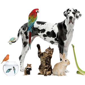 Advice for Moving with Pets